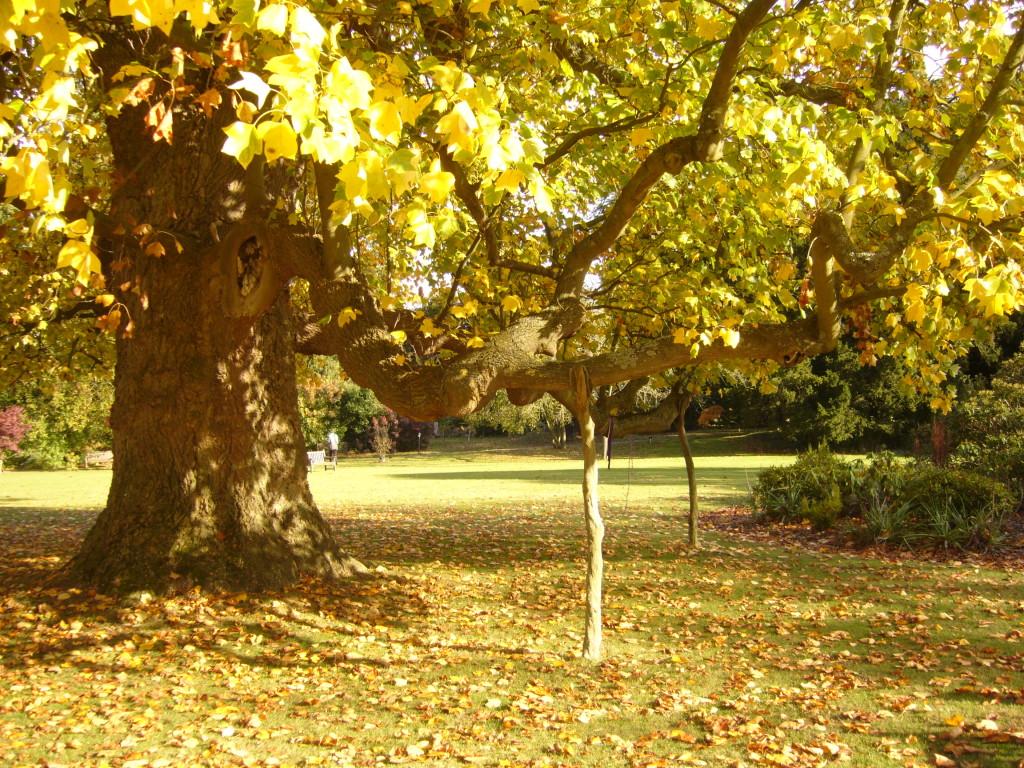 Tree of Healing, dieser Baum wird vorallem von den Schamanen hoch verehrt für seine grosse Heilenergie.